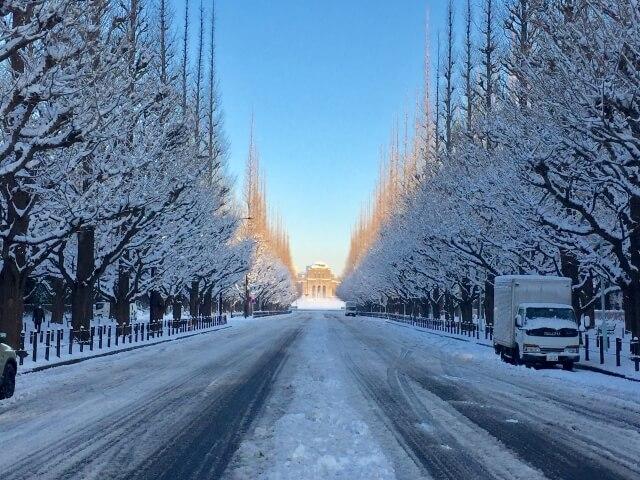 雪の街路樹