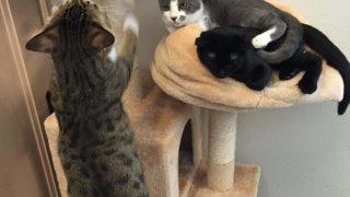 遊ぶ猫たち