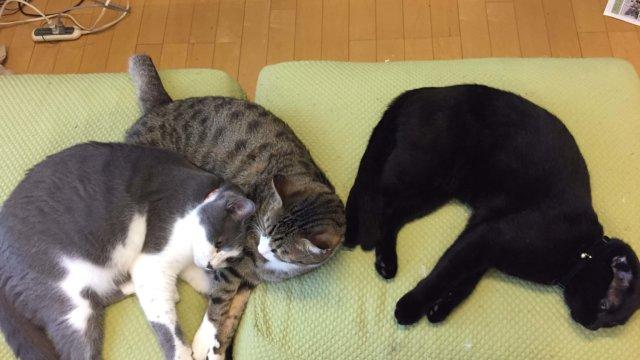 3匹の猫たち