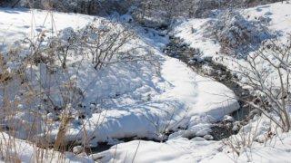 冬の川の様子